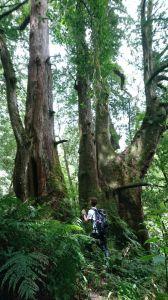 鎮西堡探索巨木的國度