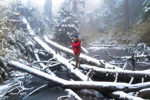 冰封的森林