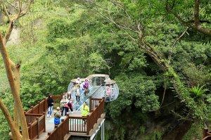 司馬庫斯順遊秀巒吊橋與青蛙石天空步道
