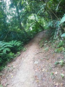 大板根森林步道
