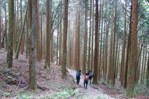 【公告】觀霧國家森林遊樂區及拉拉山巨木區6月20日起開園
