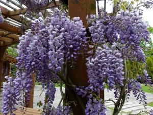 【開花筆記】除了櫻花,春天還有8種花比櫻花更漂亮!