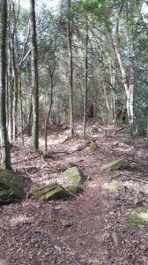 波津加山步道 2016 11 06