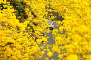 【嘉義】黃色旋風  幸福密碼