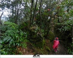 新北深坑猴山岳步道