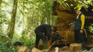 【山林】一級木失竊記~塔曼溪直擊