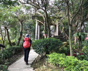 漫步樹林大棟山