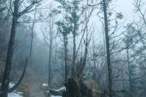 雪融台灣山毛櫸步道