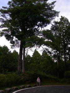 20100707 祝山觀日步道