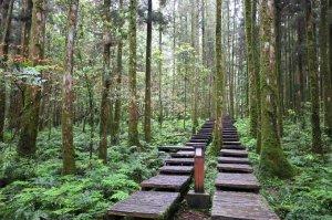 【宜蘭】三訪明池國家森林遊樂區