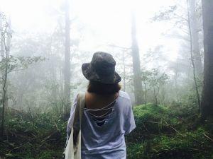 台灣山毛櫸步道