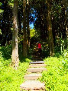 走塔山步道 攀上阿里山之巔