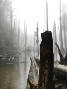 降雨機率 20% 的忘憂森林