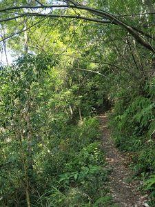 惠蓀林場杜鵑嶺步道