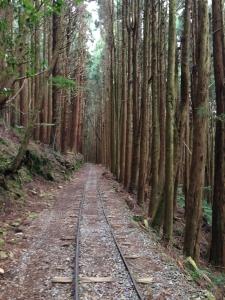 特富野古道(0-3.2K)