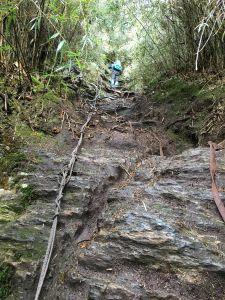 濃蔭密林-西巒大山