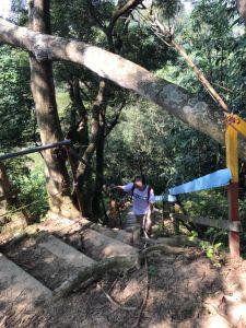 大坑登山步道是練腳力的好地方