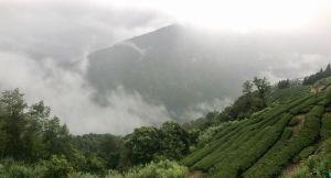觀霧瀑布步道-雪霸國家公園