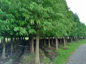 菁埔埤濕地步道