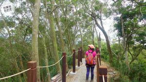 我的綠光森林(大坑6、7號步道)