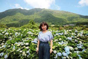 花團錦簇~草山繡球花滿開