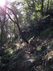 筆架山連峰續走猴山岳20190111