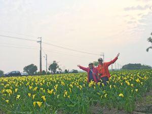 外埔黃色海芋田   2018/03/25