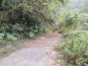 三腳南山步道