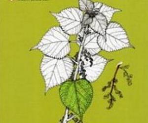 【書訊】綠色葛蕾扇:南澳泰雅的民族植物