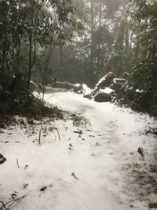 2018.02.05 新竹五指山玩雪去