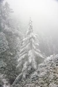 說走就走,雪季合歡山