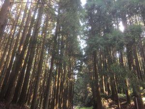 黑森林步道二萬坪