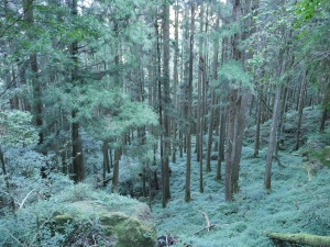 水漾森林與眠月神木