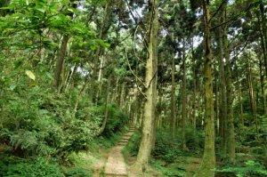 【台北市】快樂缺氧練習曲,打掉重練的概念!頂山/石梯嶺步道