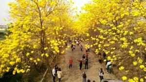 傳說中黃金風鈴木隧道