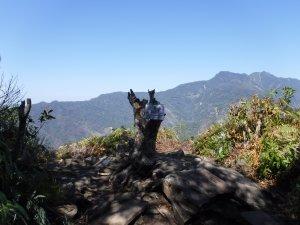 【新聞】妨礙視野?鳥嘴山樹木遭砍 林管處籲登山者珍惜山林