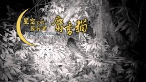【影片】陽明山有麝香貓 但牠不吃咖啡果