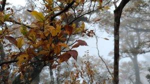 秋的色彩繽紛絢麗,美的讓人讚嘆不已!