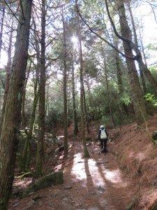 大雪山森林遊樂區觀鳥賞景20190105