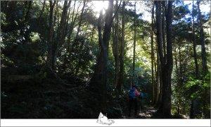 秋遊大雪山森林遊樂區‧稍來山步道