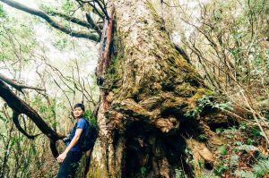 群山:與森林建立關係