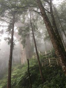 棲蘭神木園區