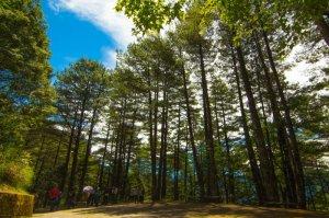 【新聞】大雪山國家森林遊樂區108年3月9日上午10點起恢復開園