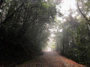 初入雪壩-雪見林間步道