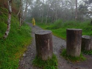 太平山之台灣山毛櫸國家步道