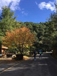 鹿林山步道健行