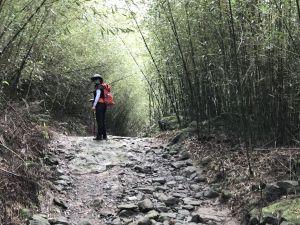 關子嶺大凍山步道