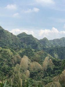 青桐林生態步道