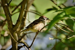 【新聞】全球生態危機 研究:北美洲鳥類50年少近30億隻