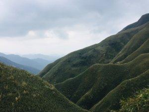 抹茶山上有草莓